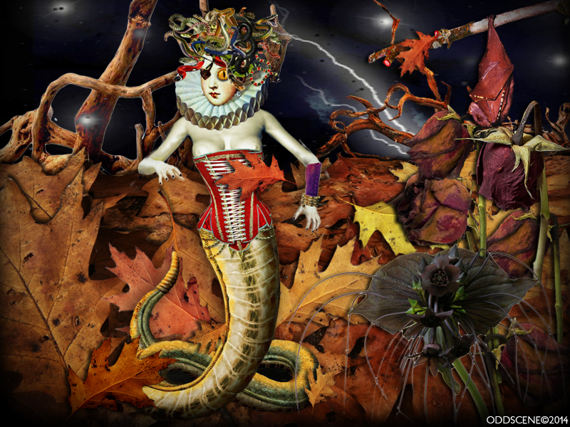 'Medusa Dark Forest'