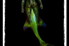 'Rococo Mermaid Borg'